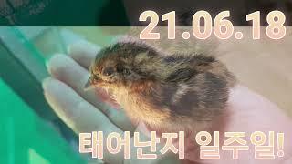 메추리 땅콩빵 시즌2 …