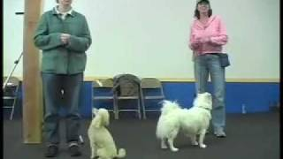 Reward Walk On-leash - Sirius Adult Dog Training