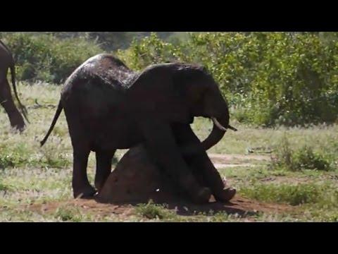 rubbing elephant baby