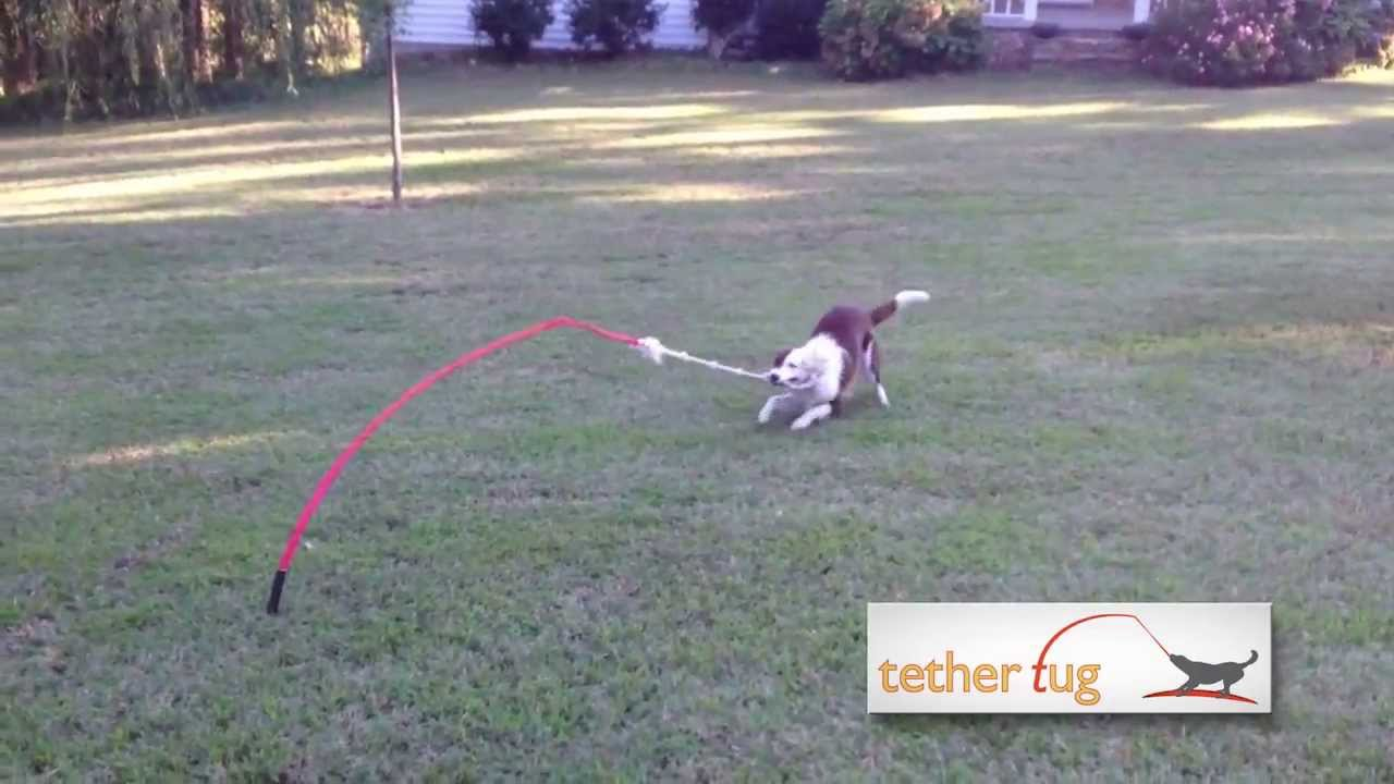 Yard Toys For Dogs : The best dog toy ever tether tug outdoor youtube