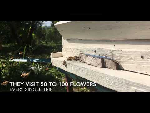 pesticide kill bees