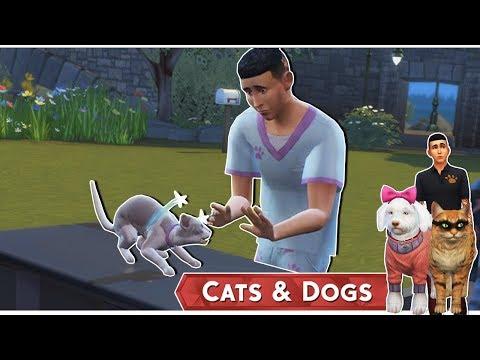 Az Állati Meló 🐕 - Az első páciens!- 6. rész (Cats and Dogs)