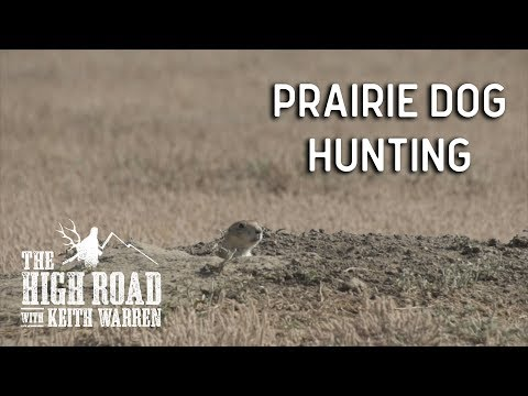 Prairie Dog Hunting Shooting Spree | The High Road With Keith Warren