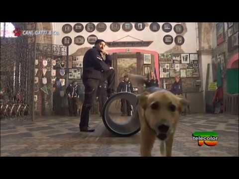 """Trasmissione """"Cani,gatti & Co."""" - 18.03.2017 - Cinofili Madonna della Strada e canile di Brescia"""