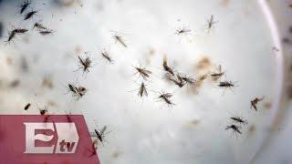 Brasil espera menor proliferación del mosquito del zika por descenso de temperatura/ Atalo Mata