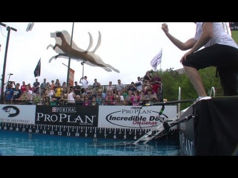 Incredible dogs compete in Atlanta