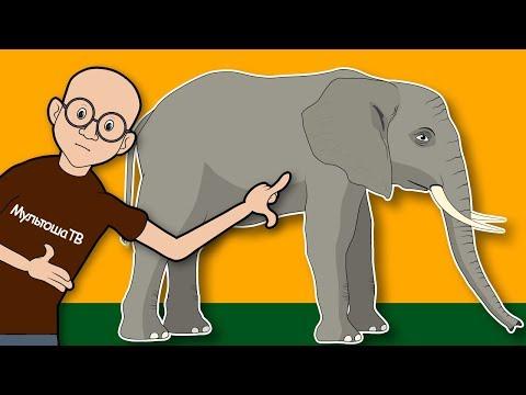 Вопрос: Умеют ли слоны сидеть, что ещё о них известно?