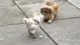 BEST EVER VIDEO! СОБАКА БЬЕТ ПТИЦУ!!!! Лучшее видео из когда либо созданных. хахаха КАЕФФ))0)