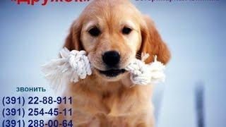 2017 Особенности кожных клещей у собак Отвечает специалист