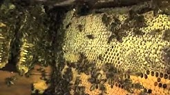 Hotter Than Hell Live Bee Removal With JP & Schawee