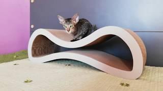 Когтеточка и ориентальные кошки