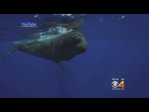 CU Students Design Underwater Drone To Help Study Whales