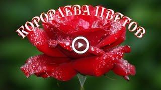 Королева цветов... Цветок любви...Красивая музыка для вас.