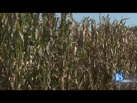 Bad news for Indiana farmland value