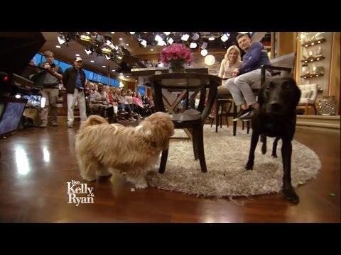 Kelly & Ryan's Dogs Meet