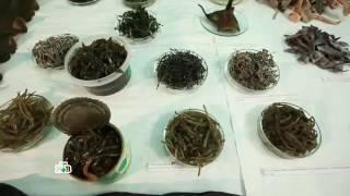 Ещё раз о пользе ламинарии и других водорослей