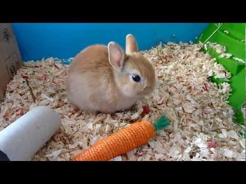 [HD] Notre lapin nain, Lilou, vit sa vie !