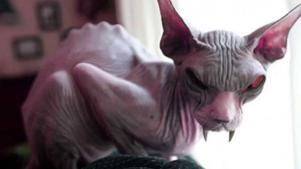 My Dog Is An Alien Ep3 Meet The Evil Cat Youtube