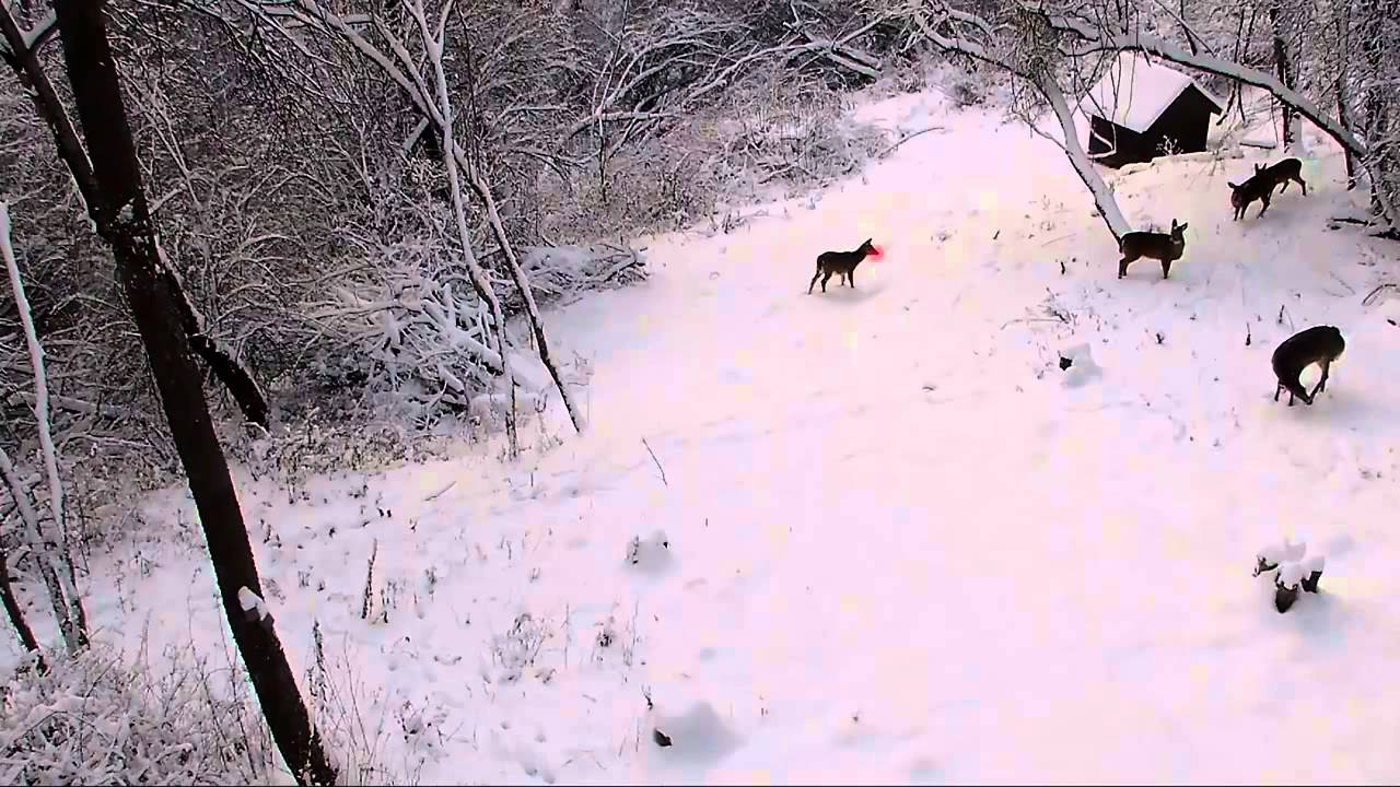 Rudolph is real! - YouTube