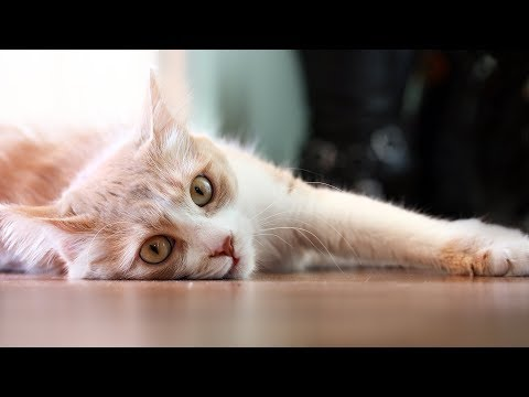 Funny Cats Sliding on Wood Floors Compilation 2013 - YouTube