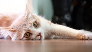 Funny Cats Sliding on Wood Floors Compilation 2013 [HD]