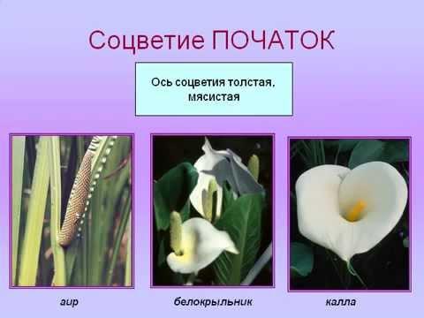 Биология органы цветкового растения вегитативные и