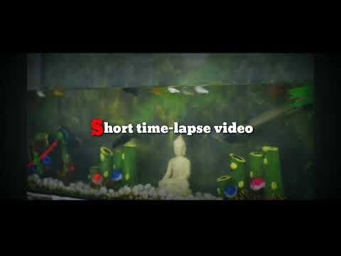 Time-lapse video fish aquarium