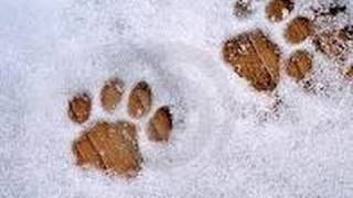 Giuliano e la neve... Thumbnail