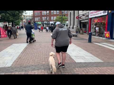3 Year Old Labradoodle | Maisy | Dog Training in London