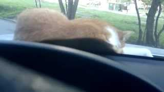 разбудил кота