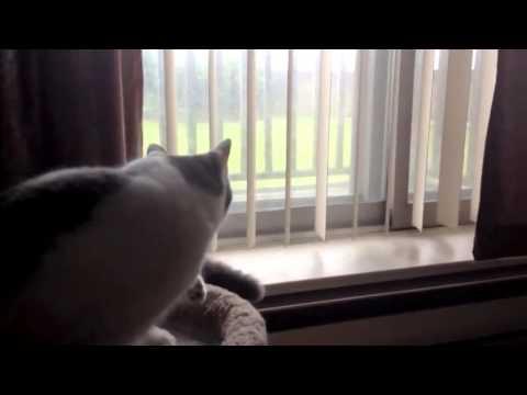 Cat Fails Trying to Hunt Bird
