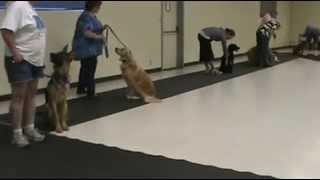 Beginning Obedience Class At Chief Solano Kennel Club