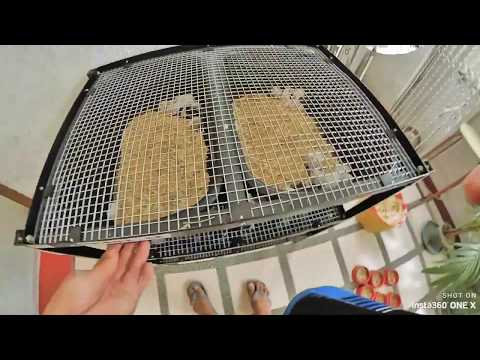 Update Rodent Breeding (Champy Racks Cages)