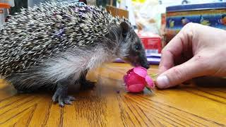 Ёжик Маруся вмазывается цветочками