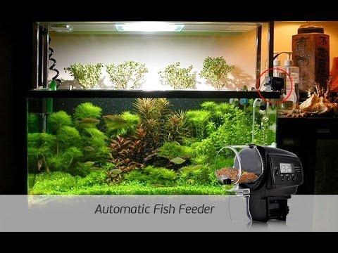 Comedero autom tico para peces casero doovi for Comedero automatico para peces