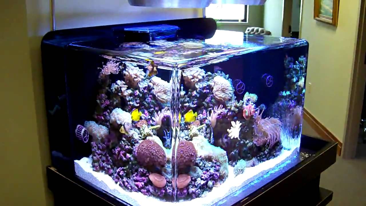 Custom Zero Edge Aquarium 4 Youtube