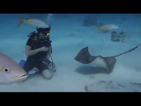 Diving with Stingrays in Stingray City, Cayman Islands