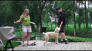 Dog Training: 3 Day Private Seminar! 4 Year Old Wheaten Terrier, Bo!