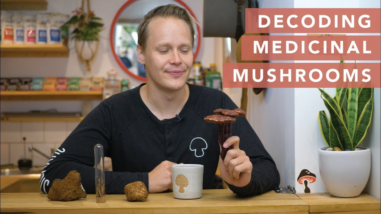 A Medicinal Mushroom Guide From Four Sigmatic S Founder Youtube