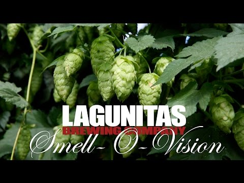 Smell-O-Vision | Lagunitas Born Yesterday Fresh Hop Pale Ale