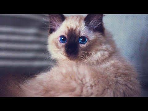 We Got A Kitten!