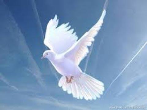 Day Eight Holy Spirit Novena