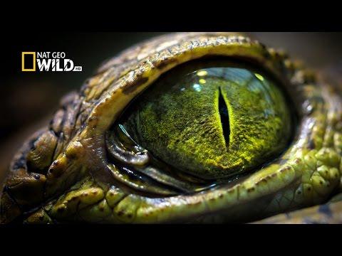 #وثائقي | سر البرازيل : بانتانال الرطبة | نات جيو وايلد العربية | Nat Geo Wild Arabic