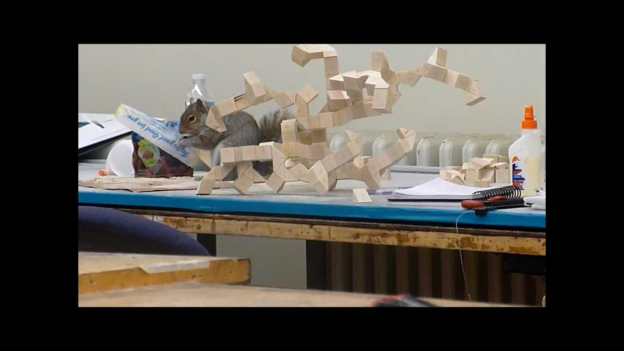 Mr. Squirrel Of 4th Floor Architecture Studio At RPI