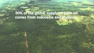 Palm Oil Plan