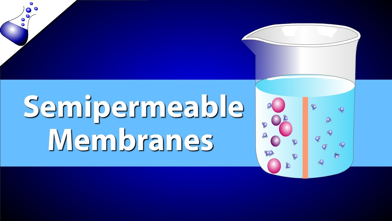 semipermeable membrane lab report Before coming to lab you should review the terms of the scientific  establishes concentration gradients across the membrane, altering diffusion and osmosis rates.