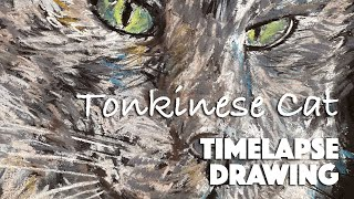 Timelapse drawing of a Tonkinese Cat