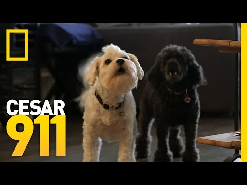Case File: Buttons and Princess | Cesar 911