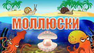 Какие бывают моллюски: полная классификация | Познавательное видео | Удивительный мир беспозвоночных