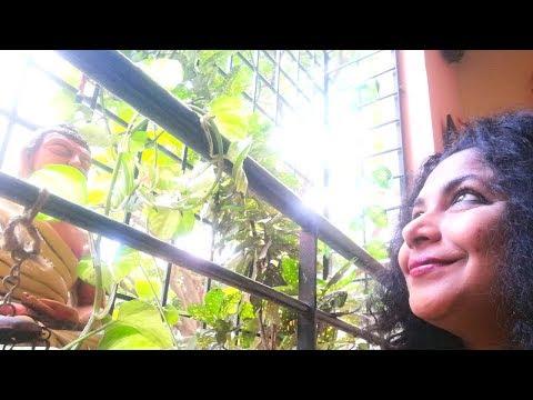 Balcony Garden Ideas | Budget Balcony Makeover | Balcony Decorating ideas | Small Budget Makeover